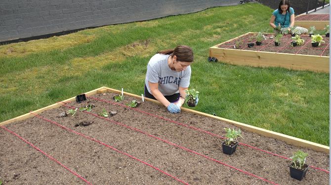Team lead Jen Johnson readies the soil for planting.