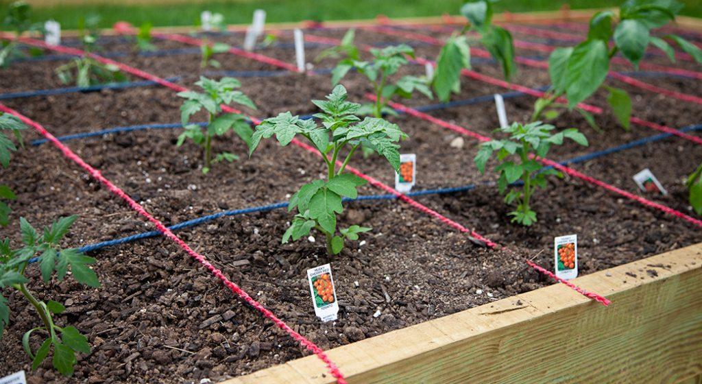 Wasserstrom starts community garden