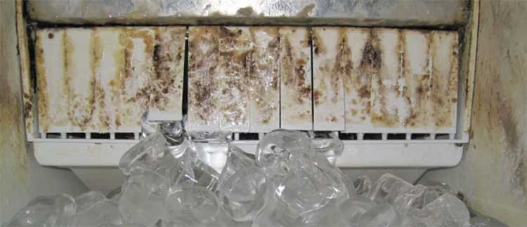 Ice Machines can get filthy. Clean them as often as you can.